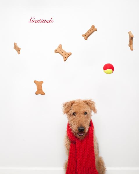 My Ernie, 2013 Christmas Card
