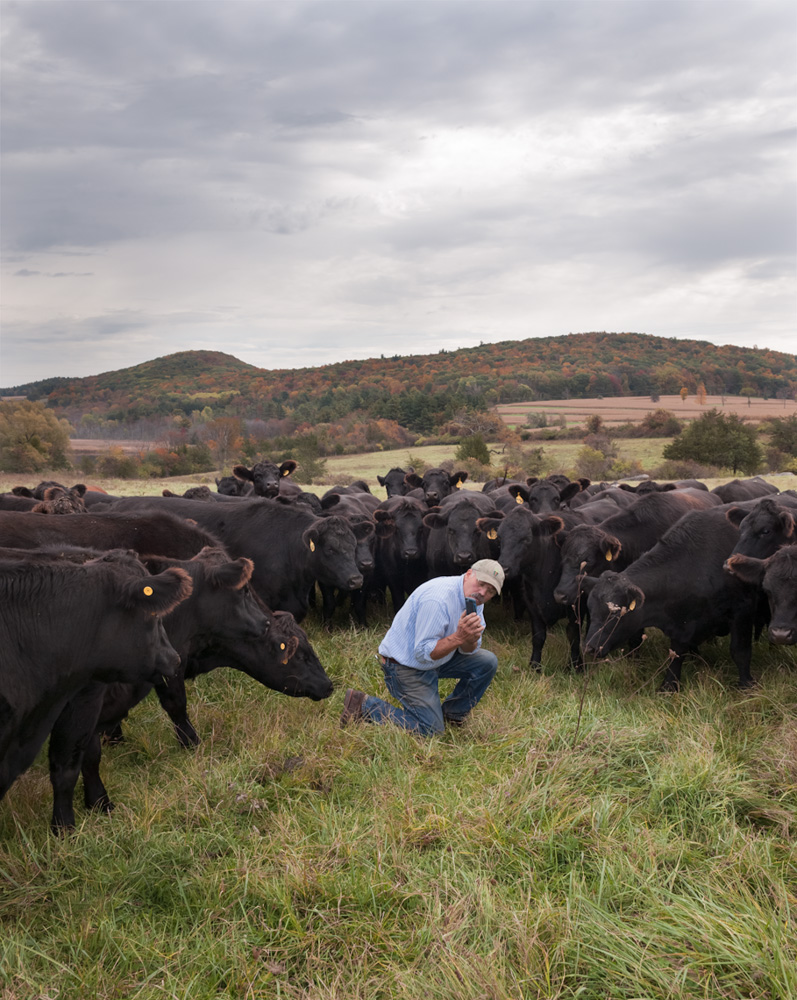 "Farmer Allen checks on the status of one of his cows on his ""Herd Book App"""